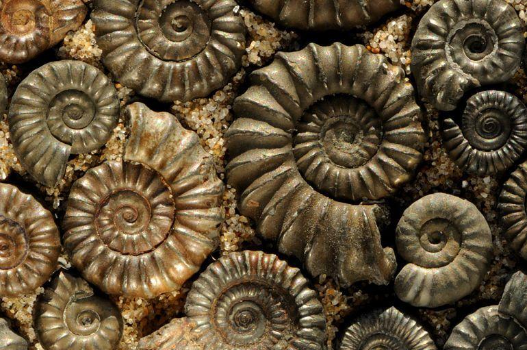 Камень Аммонит: Магические свойства и описание окаменелостей (Фото)
