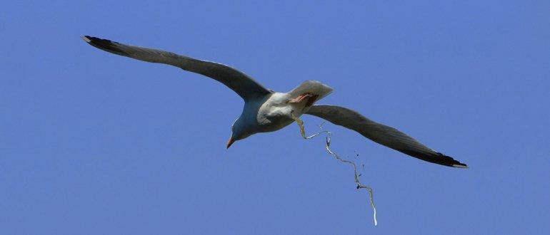 К чему птица какает на голову