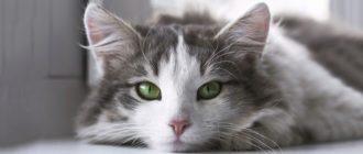 Кошкины глаза