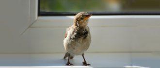 Птичка в доме
