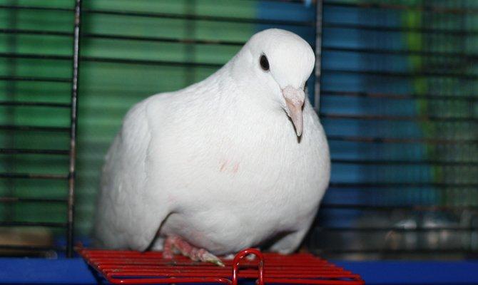 Больная птица