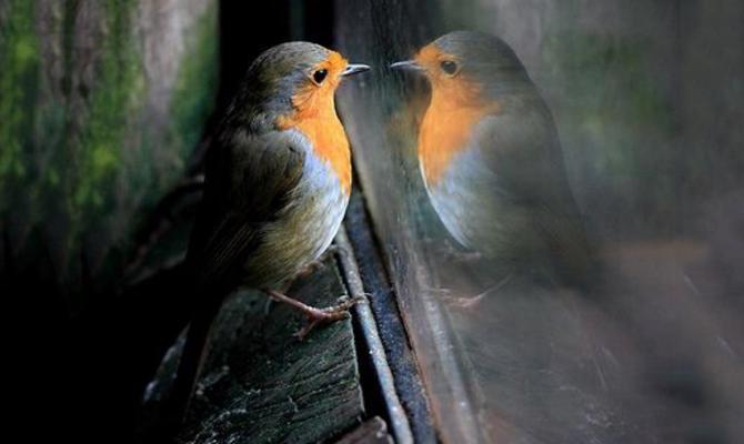 Птица за окном