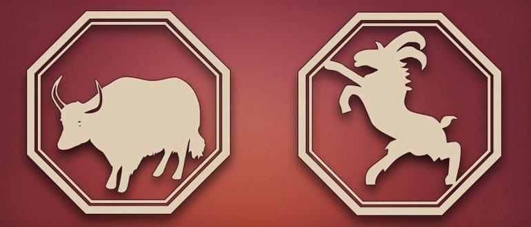 Бык и коза