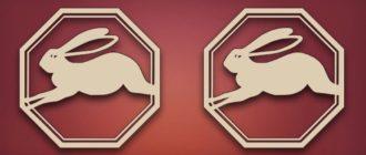 Кролик и кролик