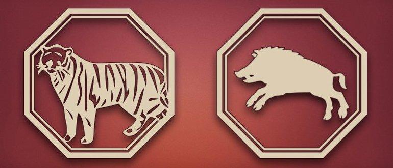 тигр и кабан