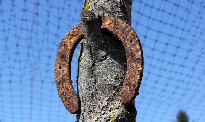 висит на дереве