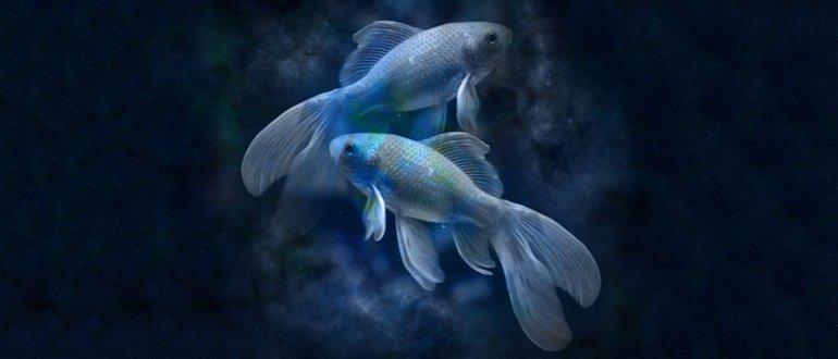 Мужчина Рыбы