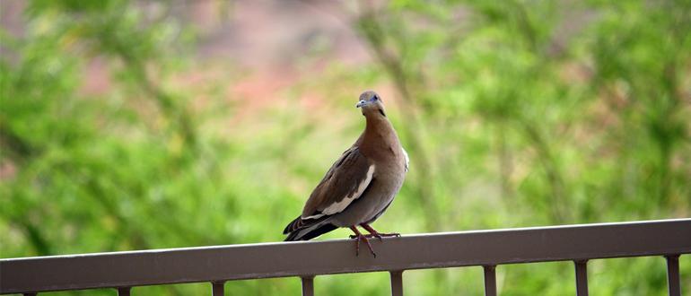 птица на балконе