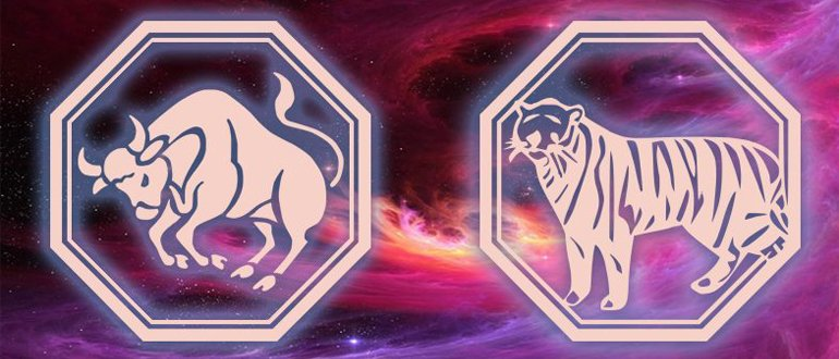 телец в год тигра