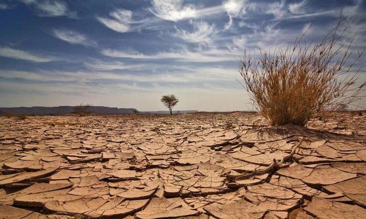 засушливое лето