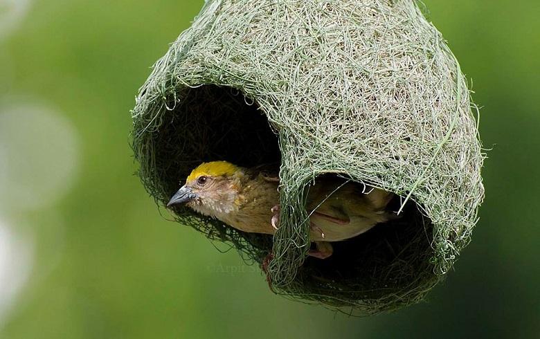птица вьет гнездо
